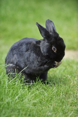 Pet Sitting - Rabbit